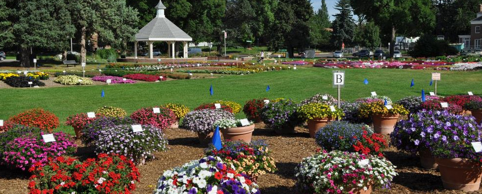 Annual Flower Garden